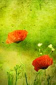 grunge floral background with poppies