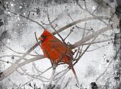 Red Cardinal Illustration