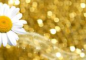 background gold and daisy