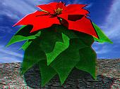 Beautiful poinsettia Flower. Anaglyph. View with red/cyan glasses to see in 3D. 3D illustration