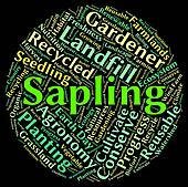 Sapling Word Means Tree Trunk And Cultivate