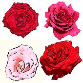 cartoon roses