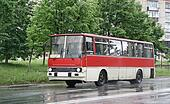 White and red bus