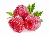 Raspberry - 3 Raspberries