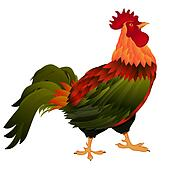 standing rooster