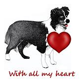 Collie dog with red heart