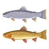 Lake trout and cutthroat trout