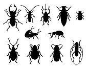 Collection of beetles