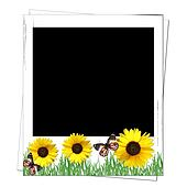 old polaroid frame  with sunflowers and butterfly