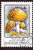 Canceled Hungarian Postage Stamp Amanita pantherina Panther Cap Mushroom In Wild