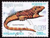 Critically endangered Lesser Caymans Iguana, Cyclura Nubila Caymanensis, formerly known as Cyclura macleayi.