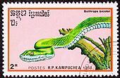 Bright green Guatemalan Palm-Pitviper Bothrops Bicolor.  Also known as the Guatemalan tree viper.