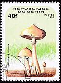 Psilocybin mushroom, Psilocybe cubensis, formerly Stropharia cubensis.   Psychedelic mushroom