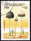 Teonanacatl psychedelic mushroom, Psilocybe mexicana.  Looks like Dr Seuss illustrated this.