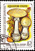 Canceled Soviet Russia Postage Stamp Amanita Pantherina Panther