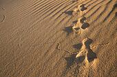 Rabbit tracks in the sand