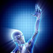 human hand bones radiography