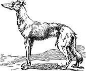 Saluki or Borzoi dog engraving