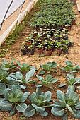 vegetables cultivation