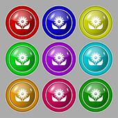 Bouquet of flowers with petals icon sign. symbol on nine round colourful buttons.