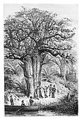 Monkeys in the garden of Jacintho Amoriz, vintage engraving