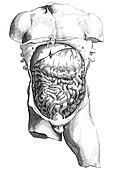 Internal body engraving