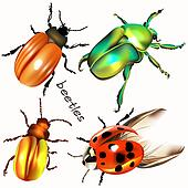 Collection of vector realistic colorful beetles for design