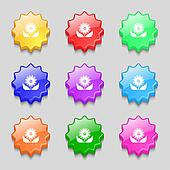Bouquet of flowers with petals icon sign. symbol on nine wavy colourful buttons.