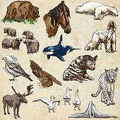 Animals around the world (set no.11) - Hand drawn illustrations