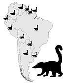 Coati  range