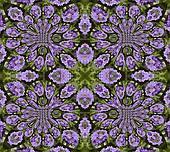 Pretty Primula Mosaic