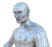 Human male mesh torso with head
