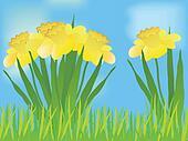 Daffodil landscape