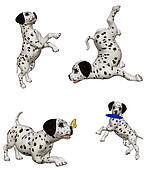 Dalmatian puppies2