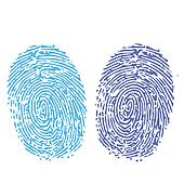 comparison of thumbprint