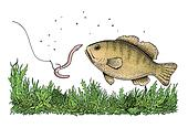 Fishing illustration