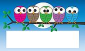 colorful owls sitting on a branch