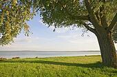 Big tree at lakeside