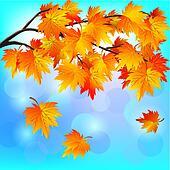 Autumn tree maple on blue background