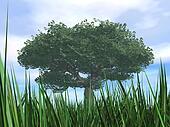 Tree with green dense foliage