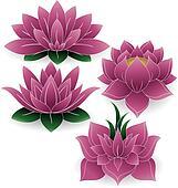Lotus Set Colored 1