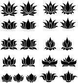 Lotus Set 1