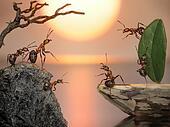 team of ants sailing back home, fantasy