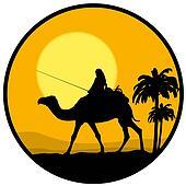 desert, sunset and the camel