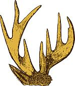 Trophy of antlers .