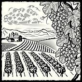 Vineyard landscape black and white