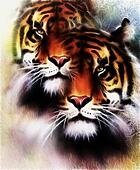 tiger collage on color abstract  background and mandala with ornamet , wildlife animals. Brown, orange, black and white color.