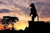Silhouette monkey baboon