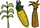 Corn in Three Stages