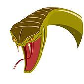 Head of snake
